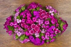 Carnation on the oak panel Royalty Free Stock Photo