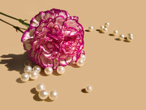 Carnation and pearls Royalty Free Stock Images