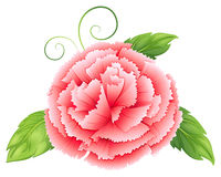 A carnation pink flower with leaves Royalty Free Stock Image
