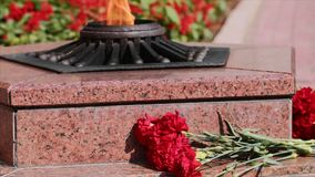 Carnation red flowers on granitic steps by Eternal flame monument in Sevastopol. Monumen with star and flowers at Grave of Unknown Soldier. Carnation red stock video footage