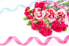 Carnation with ribbon Royalty Free Stock Photo
