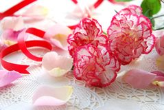 Carnation and rose petals Royalty Free Stock Images