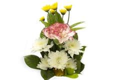 Carnation set on white Royalty Free Stock Photography