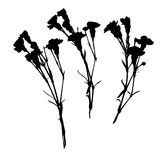 Carnation silhouettes Stock Photography