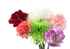 Carnation and Spider Mum Royalty Free Stock Photos
