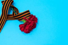 Carnation and St. George ribbon on blue background as greeting cards royalty free stock photography