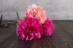 carnations fotografia de stock royalty free