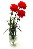 Carnations Royalty Free Stock Image