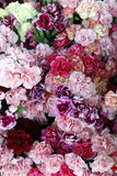 Carnations 3 Royalty Free Stock Photography