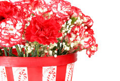 Free Carnations Stock Images - 7419364