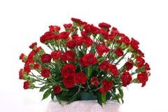 Free Carnations Stock Image - 982741