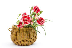 Carnations in a basket Stock Image