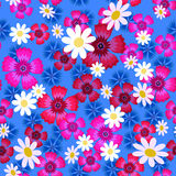 Carnations, cornflowers and daisies1-01 Stock Image