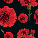 Carnations flower. Seamless pattern carnations flower. Floral background. Vector illustration Stock Images