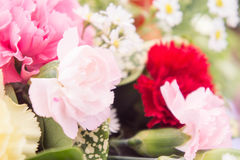 The Carnations flowers background vintage style romantic flowers Stock Photo