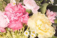 The Carnations flowers background vintage style romantic flowers Royalty Free Stock Photos