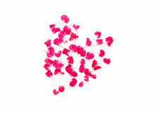 Carnations flowers in heart shape arrangment. On white background Stock Images
