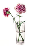 Carnations in a Glass. Watercolour illustration of two carnations in a glass of water Royalty Free Stock Images