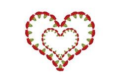 Carnations Heart Stock Photo