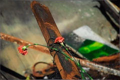 Carnations in memory. Two cloves barbed wire strapped to a metal beam Stock Image