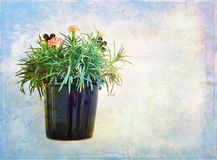 Carnations in a pot on artistic background Royalty Free Stock Photography