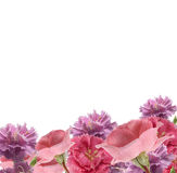 Carnations and roses border royalty free stock image