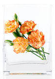 Carnations in vase Royalty Free Stock Images