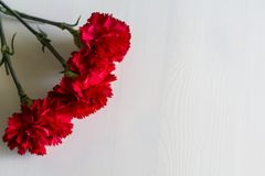 Carnations on white wooden background stock photos