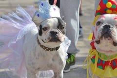 Carnaval de Las Palmas de Gran Canaria 2015 Carnevale dell'amico di Las Fotografia Stock Libera da Diritti
