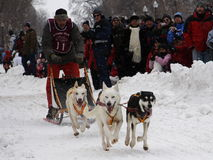 Carnaval de Quebeque: Raça do trenó do cão Imagens de Stock