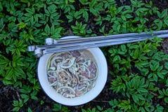 Carne adobada para el kebab y pinchos en la hierba Fotos de archivo libres de regalías