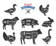 A carne britânica do vetor corta diagramas ilustração stock