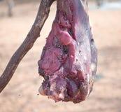 Carne con las moscas Fotografía de archivo