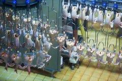 Carne di pollo sul nastro trasportatore Immagine Stock Libera da Diritti