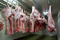 Carne fresca 7 Fotografie Stock