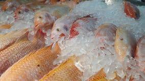 Carne fresca en el mercado Sano Surtido fresco de la carne del corte del carnicero adornado Imagen de archivo libre de regalías