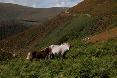Carneddau Snowdonia Stock Photography