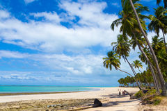 Carneiro Beach, Pernambuco. A tropical beach landscape, located at the state of Pernambuco, near Recife, Brazil. It is calm, with white sands and green waters Royalty Free Stock Photography