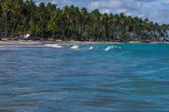 Carneiros海滩, Tamandarï ¿ ½ - Pernambuco 免版税图库摄影