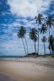 Carneiros海滩, Tamandarï ¿ ½ - Pernambuco 库存图片