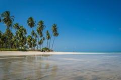 Carneiros, Pernambuco巴西海滩海滩  免版税图库摄影