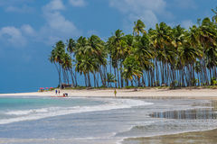 Carneiros, Pernambuco巴西海滩海滩  图库摄影
