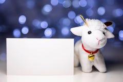 Carneiros com cartão vazio Imagens de Stock Royalty Free