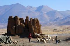 Carneiros com relíquias e montanhas em Tibet Imagens de Stock
