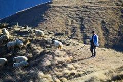 Carneiros com shepard em um campo em Geórgia fotografia de stock royalty free