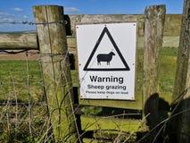 Carneiros de advertência novos que pastam o sinal Isto protege a pastagem de carneiros paire e recomenda proprietários do cão em  fotos de stock