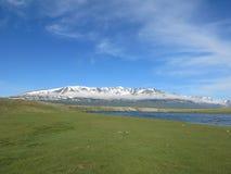 Carneiros de Mongólia - estilo de vida e paisagem tradicionais em Mongólia ocidental fotos de stock royalty free