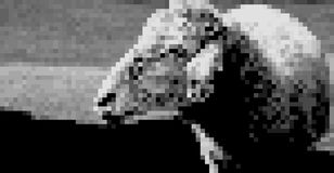 Carneiros do smiley na imagem do estilo da arte do pixel Imagens de Stock Royalty Free