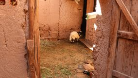 Carneiros e celeiro em Kasbah Aît Ben Haddou, Maroc imagem de stock royalty free