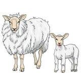 Carneiros e cordeiro, ilustração do vetor Imagem de Stock Royalty Free